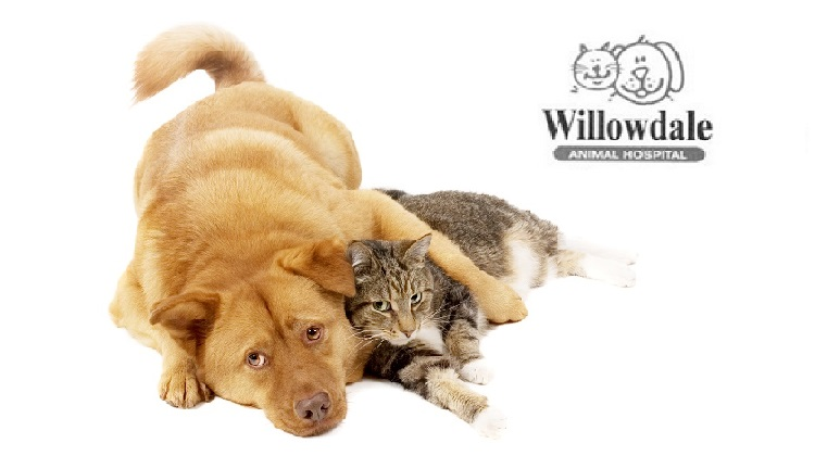 Willowdale Animal Hospital cares about the community